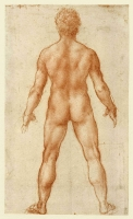084r_Anatomical_Studies_12596r_084r