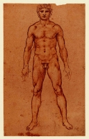 086r_Anatomical_Studies_12594r_086r
