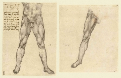089r_Anatomical_Studies_12631r_12633v_089r