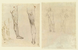 089v_Anatomical_Studies_12633r_12631v_089v